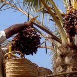 نیکوکاران استان یزد ۴۸ میلیارد ریال زکات دادند