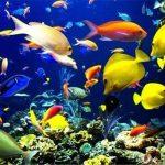 رتبه اول میبد در پرورش ماهیان زینتی در استان