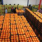 عرضه میوه تنظیم بازار تا ۲۵ فروردینماه ادامه دارد