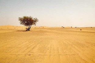بیابانزایی، مهمترین چالش زیستمحیطی در استانیزد
