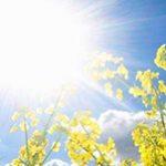 یزدیها منتظر افزایش ۴ درجهای دمای هوا باشند