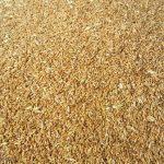 میبد از عمده تولید کنندگان گندم در استان یزد