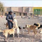 سگهای بلاصاحب در یزد صاحب پناهگاه می شوند