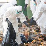 خطر شیوع مجدد آنفولانزای فوق حاد پرندگان در یزد