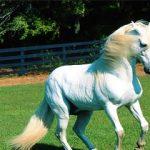 راه اندازی پیست سوار کاری اسب در میبد/ به زودی