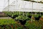 قابل توجه فارغ التحصیلان جویای کار رشته کشاورزی در میبد